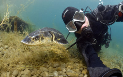 Mal schnell den Kopf unter Wasser stecken – am D.Loch im Allgäu