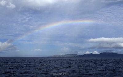 Regenbogen im (Riff-) Garten