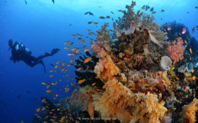 Fiji mit Anlaufschwierigkeiten