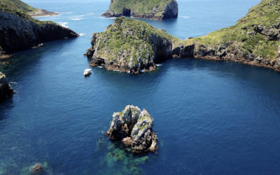 "Die ""Armen Ritter Inseln"" – the Poor Knights Islands"