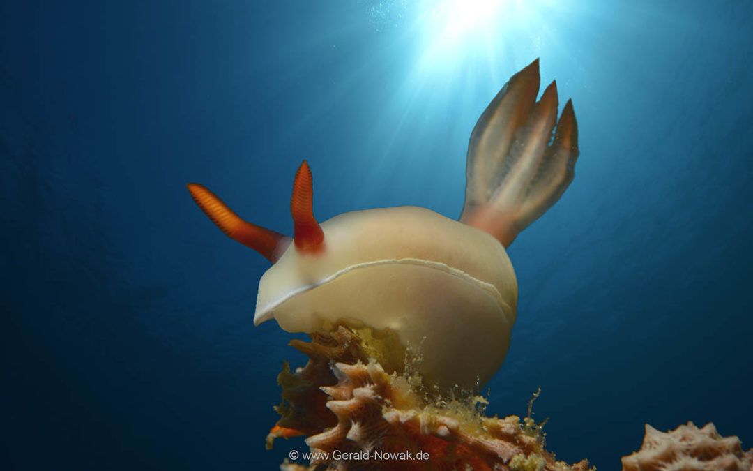 Exploration Tour Philippines 2018 – Magic Ocean Resort in Anda, Bohol
